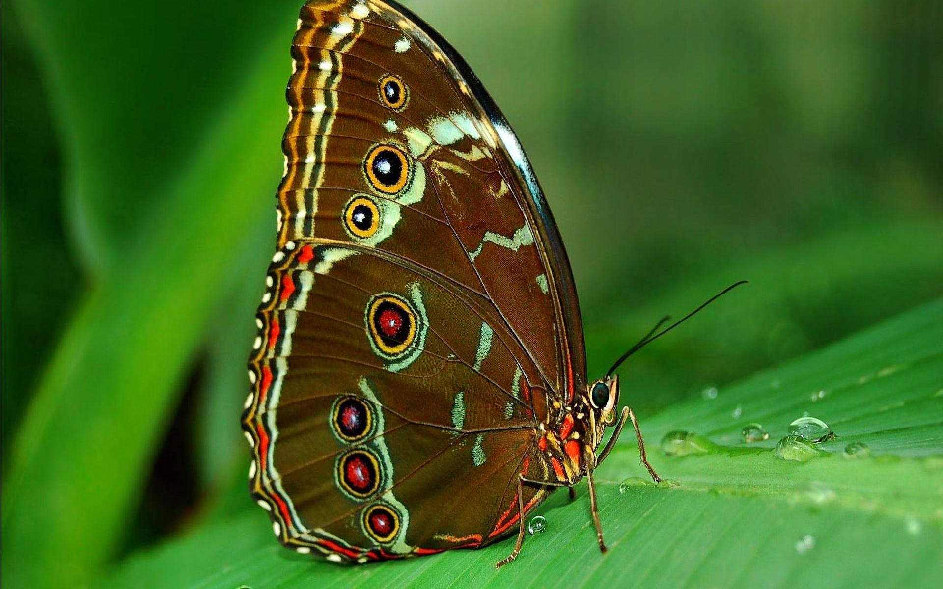 31 papillon chenilles papillons animaux