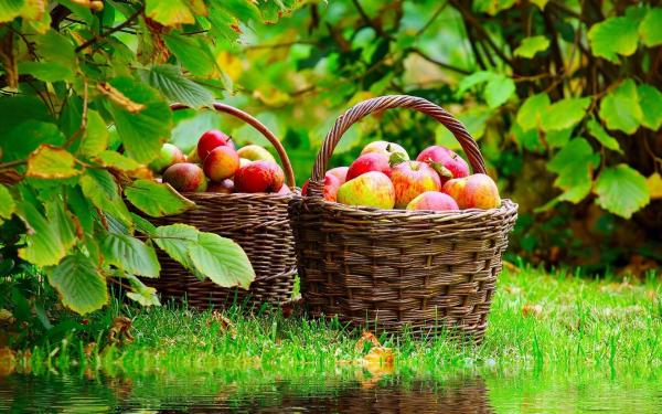 Basket with apples 1920x1200
