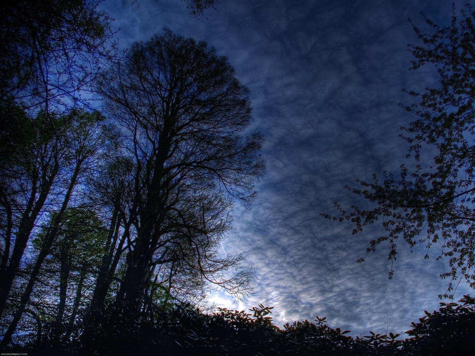 Fond ecran nature paysages arbres 039